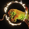 Цирки в Кольчугино