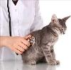 Ветеринарные клиники в Кольчугино